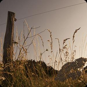 renovables electrificación fotovoltaica ganadería